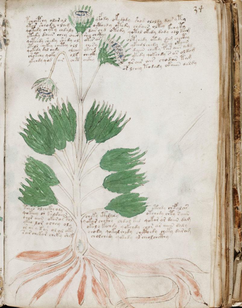 voyonich-manuscript2