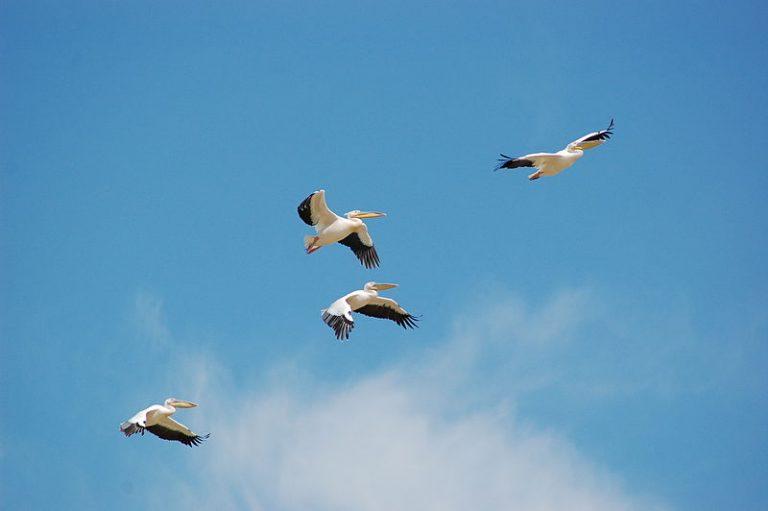 महाभारत काल के चार रहस्यमय पक्षी जिन्हें अपना पूर्वजन्म याद था