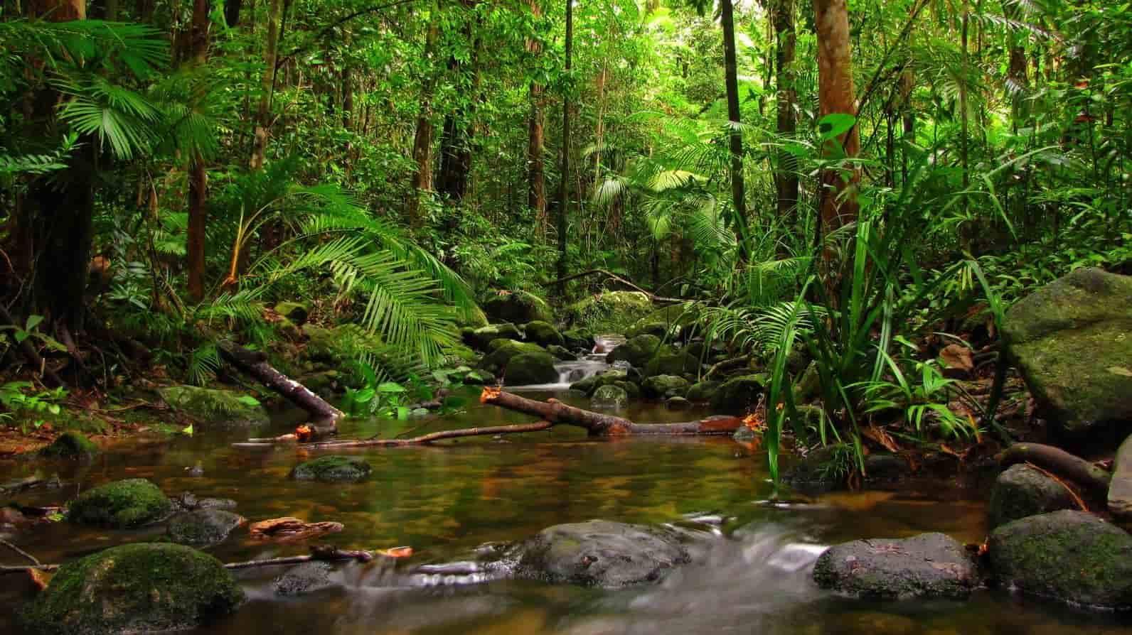 अमेजन जंगल का रहस्य